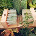 ecobillones chile directorio sustentable
