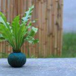 Plantisomnia directorio sustentable 1