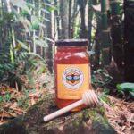abejas del bosque colombia directorio sustentable