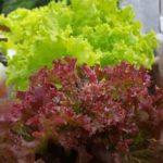 amaru cultivos hidroponicos Colombia directorio sustentable
