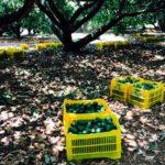 anacahuita ecotienda mexico directorio sustentable