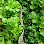 bioingenio ecuador plantas huerto directorio sustentable