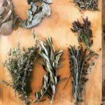 botanica aurea talleres chile directorio sustentables
