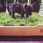 boxi argentina sanitario natural mascota directorio sustentable