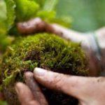 brios arte en verde deco directorio sustentable argentina