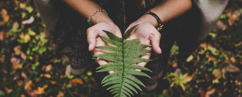 Reflexión en el Día Mundial del Medio Ambiente