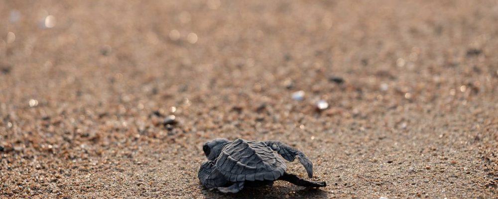 Tus desechos afectan la vida de especies que ni siquiera te imaginas