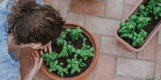 Educación Ambiental por VitruBio Soluciones Ambientales
