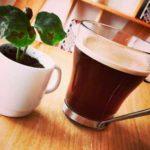 my coffee box cafe organico mexico directorio sustentable