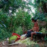 casa surya colombia directorio sustentable