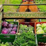 clorofila directorio sustentable 2