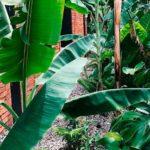 estacion salvaje uruguay paisajismo espacios verdes directorio sustentable