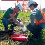 estudios ambientales argentina consultora medio ambiente directorio sustentable