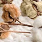 eupheme peru ropa interior algodon organico directorio sustentable