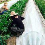 fenix farms directorio sustentable mexico