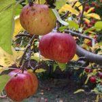 floreser frutas hortalizas organicas argentina directorio sustentable