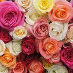flores chiltepec mexico directorio sustentable