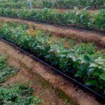 ideas verdes soluciones peru reciclaje abono directorio sustentable