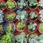 hogar de cactus argentina suculentas tienda plantas directorio sustentable