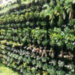instructivo verde mexico directorio sustentable