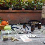 lina alvarado naturopatia talleres colombia directorio sustentable