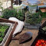 aitue ama la tierra chile compost organico directorio sustentable
