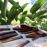 jacaranda eco shop paraguay directorio sustentable