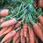 la organica directorio sustentable 1