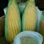 bolsas soy de maiz compostables chile biodegradables directorio sustentable