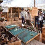 fundacion mingako chile aprendizaje experiencial talleres directorio sustentable