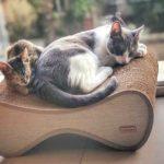 chartoni argentina muebles gatos directorio sustentable