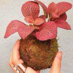 musaraña garden directorio sustentable 1
