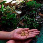 natura mentis honduras directorio sustentable