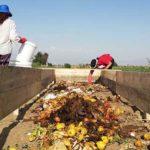 namuntu lombriclub chile gestion de residuos organicos directorio sustentable