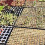 opus terra directorio sustentable 2