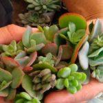 pituca tienda botanica argentina directorio sustentable
