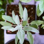 hestia hogar plantas argentina