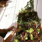 proyecto cultivarte directorio sustentable 1