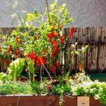 pura vida huertas organicas directorio sustentable 2