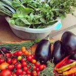pura vida huertas organicas directorio sustentable 1