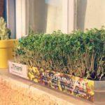 thani germinados organicos directorio sustentable argentina