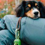 tienda bio argentina mascotas directorio sustentable