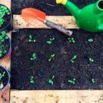 cultivando vida huertas organicas colombia talleres directorio sustentable