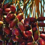 volvamos a lo natural chile alimentacion granel directorio sustentable